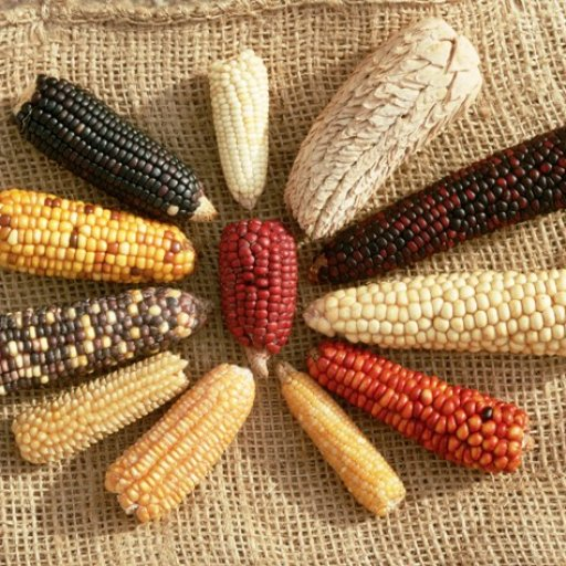 Кукурузная неделя