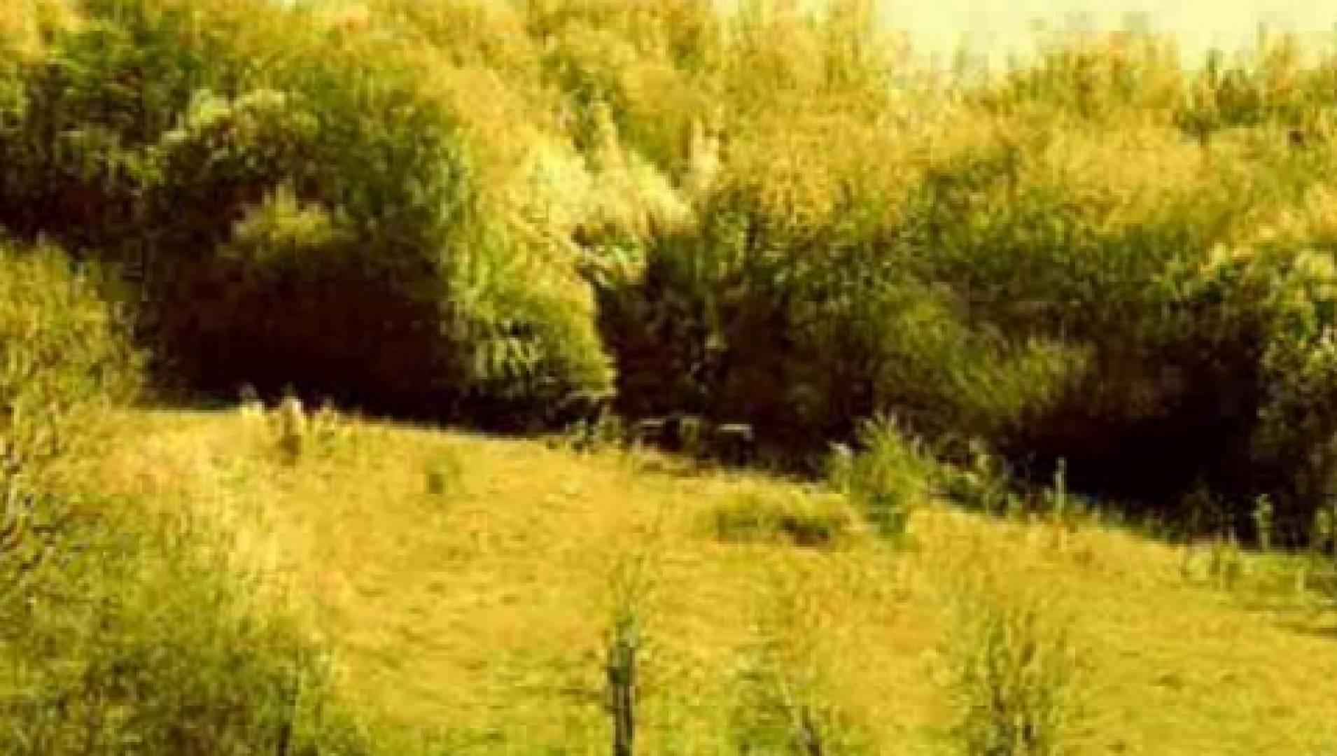 Отшельники - Документальный фильм