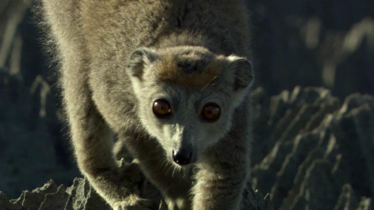 Мадагаскар - Познавательный, Документальный фильм