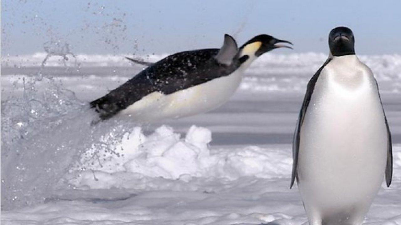 Замороженная планета - Документальный фильм