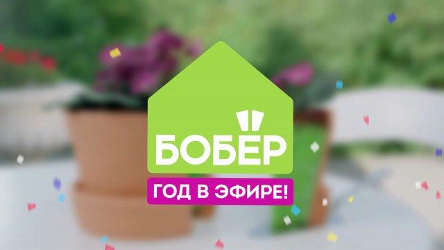 Телеканалу «Бобёр» — 1 год
