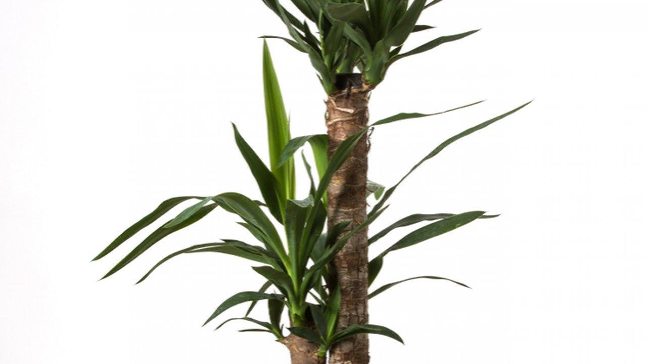 ТЕСТ: Насколько хорошо вы разбираетесь в комнатных растениях