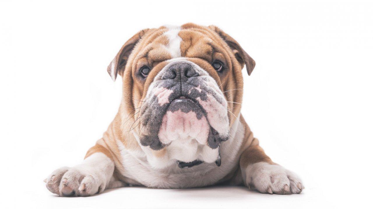 ТЕСТ: Угадайте пород собаки!