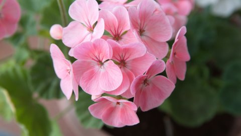 ТЕСТ: Угадайте комнатное растение по цветку