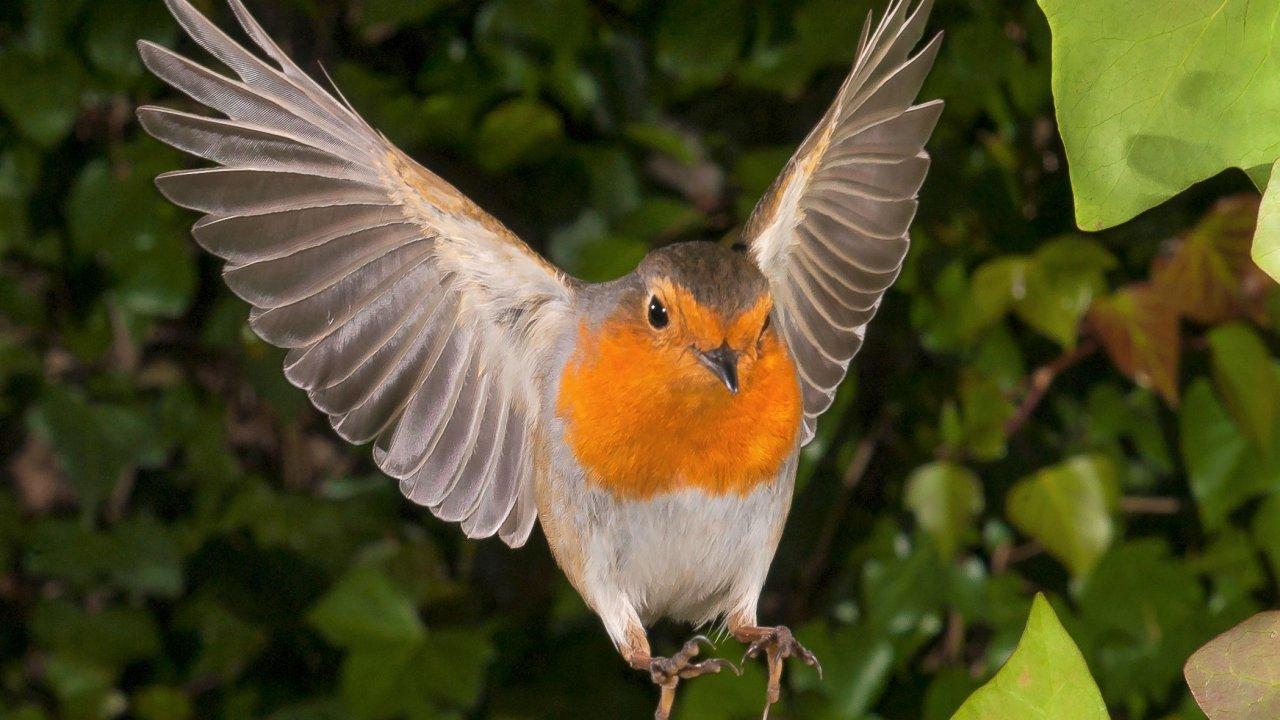 ТЕСТ! Хорошо  ли вы знаете перелётных птиц?