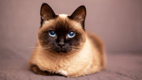 Знаете ли вы популярные породы кошек?