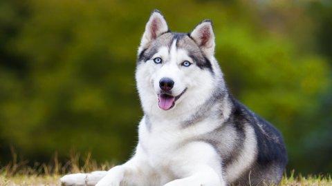 Разбираетесь ли вы в породах собак? Тест от тв-шоу «Лапы, морды и хвосты. О собаках»