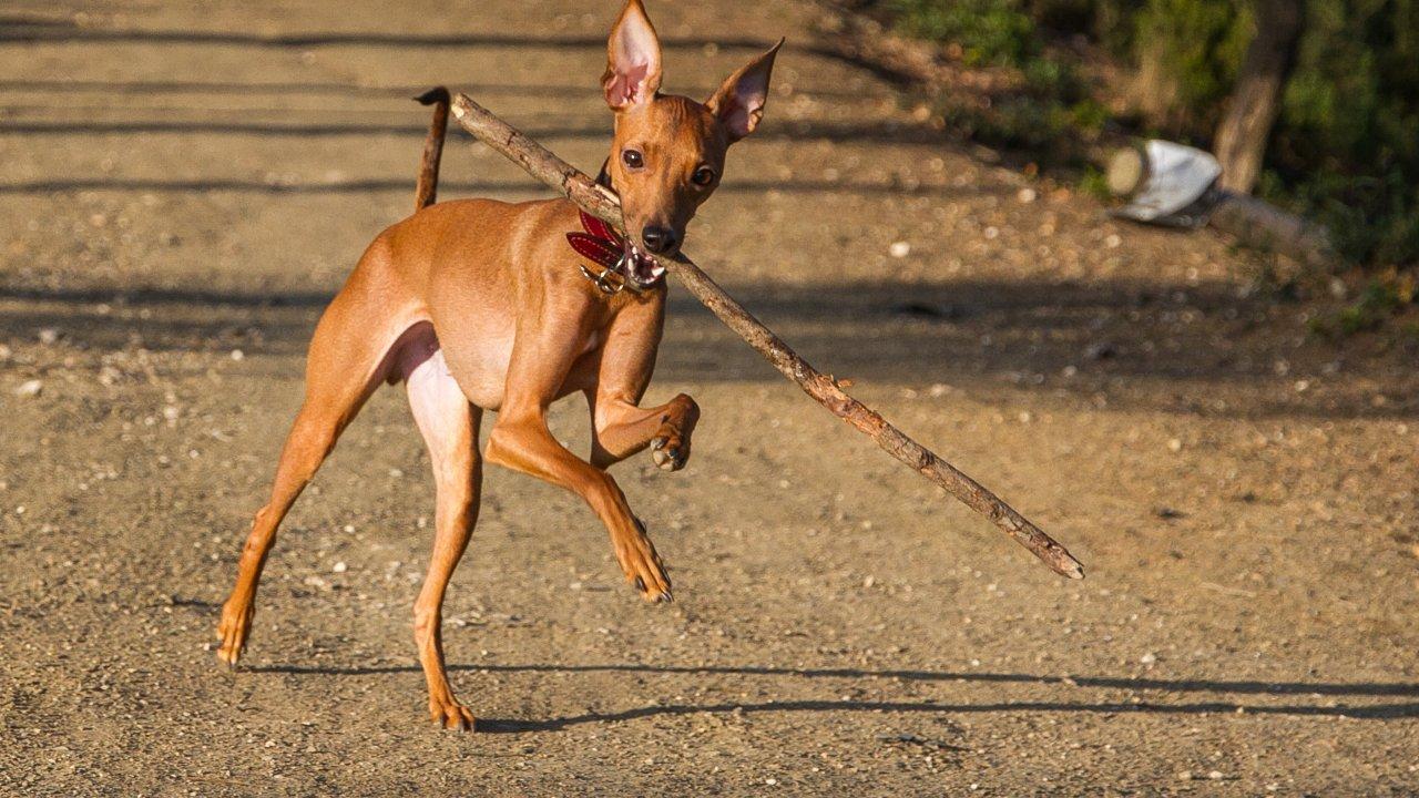 ТЕСТ. Неизвестные породы собак