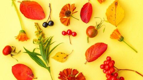 ТЕСТ: Угадайте ягоду
