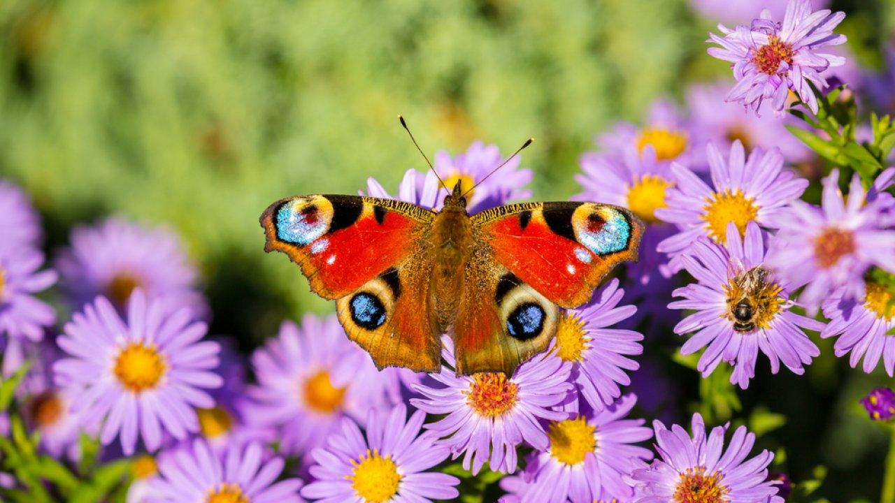 ТЕСТ! Угадайте, что за бабочка