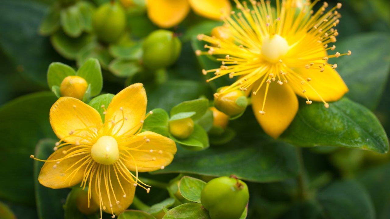 ТЕСТ: Как назвается луговой цветок?
