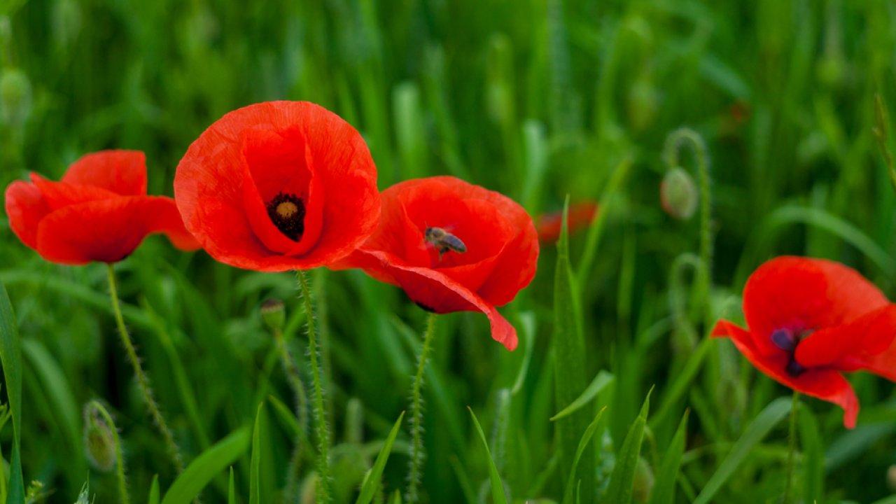 ТЕСТ: Угадайте аленький цветочек