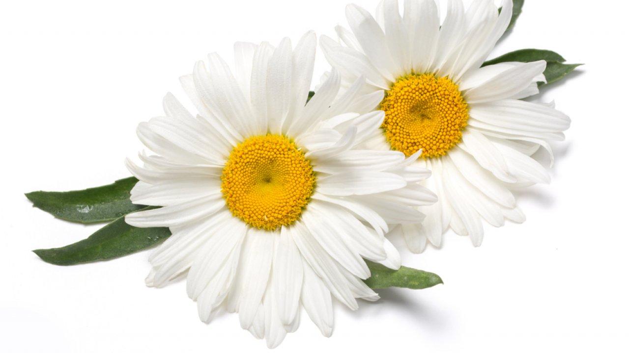 ТЕСТ: Угадайте белый цветок!