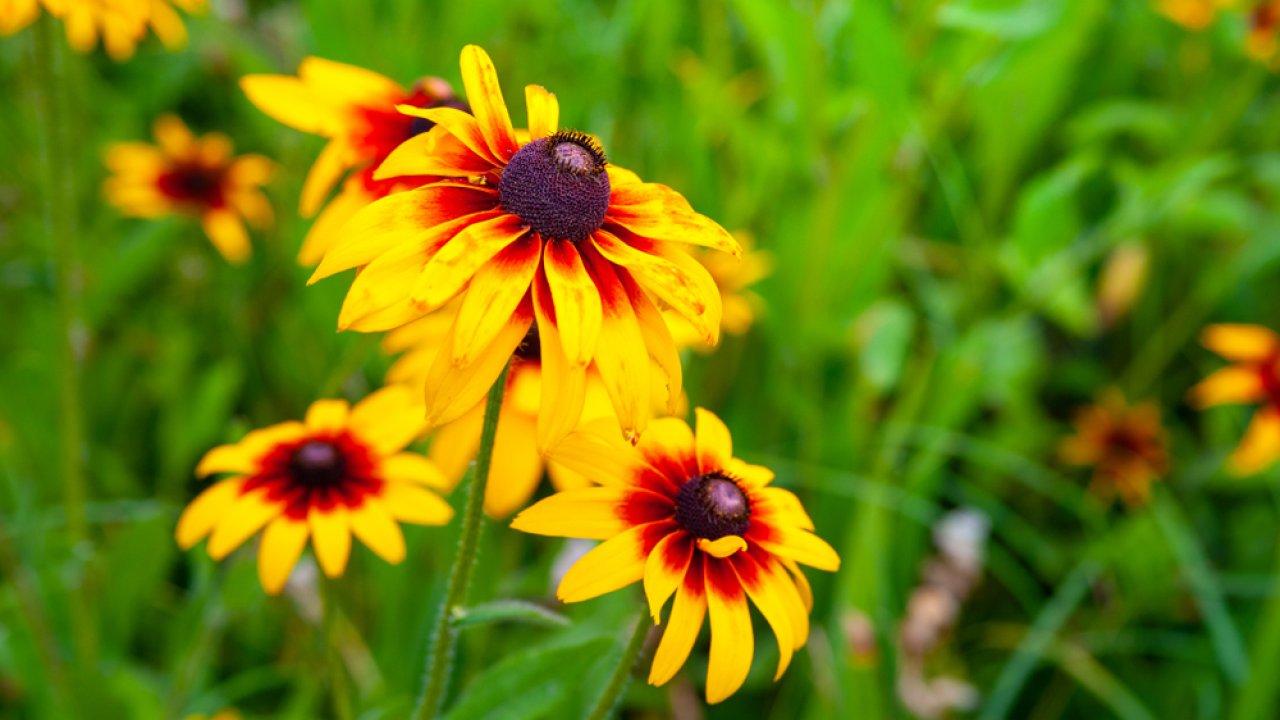 ТЕСТ: Угадайте жёлтый цветок