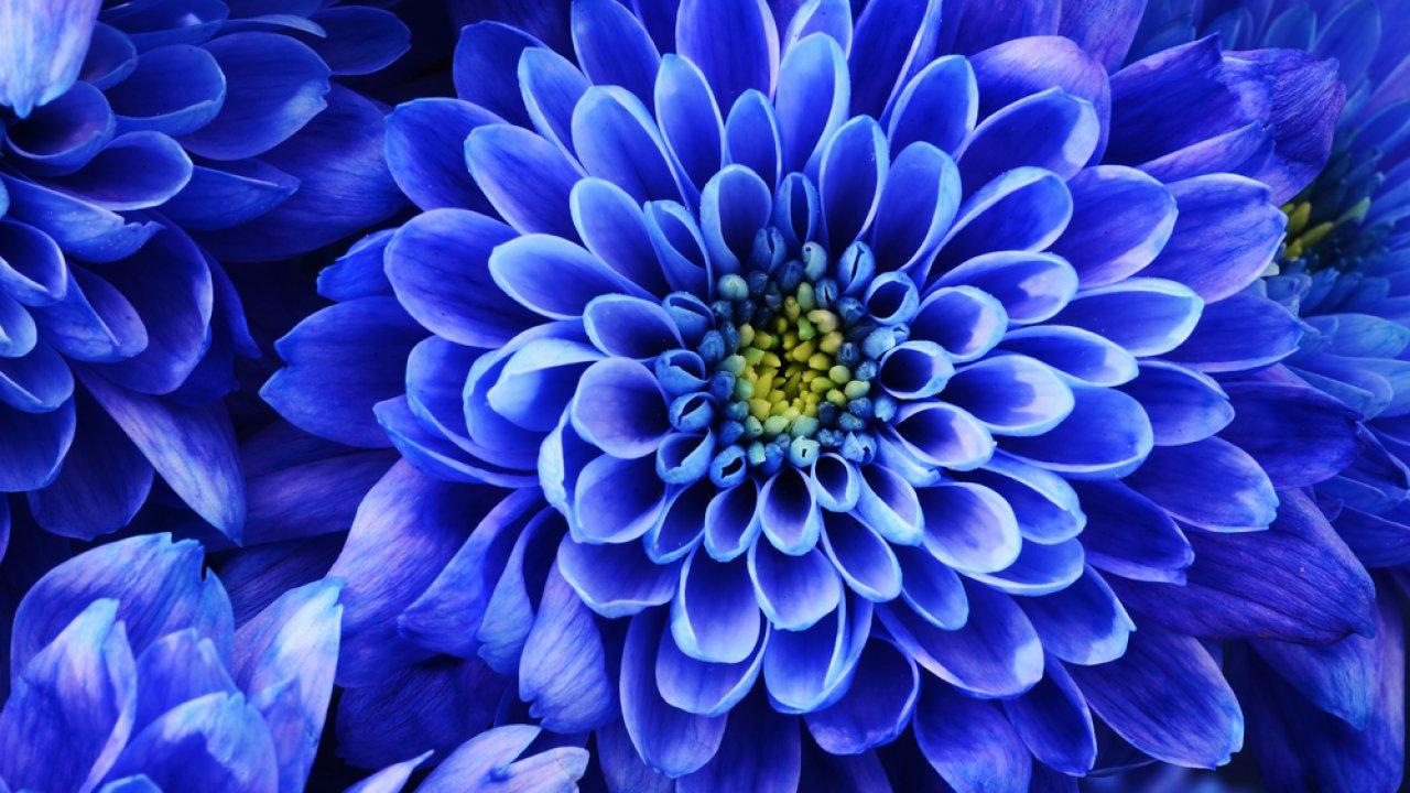 ТЕСТ: Девять оттенков синего