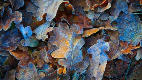 ТЕСТ: Угадайте дерево по листу!