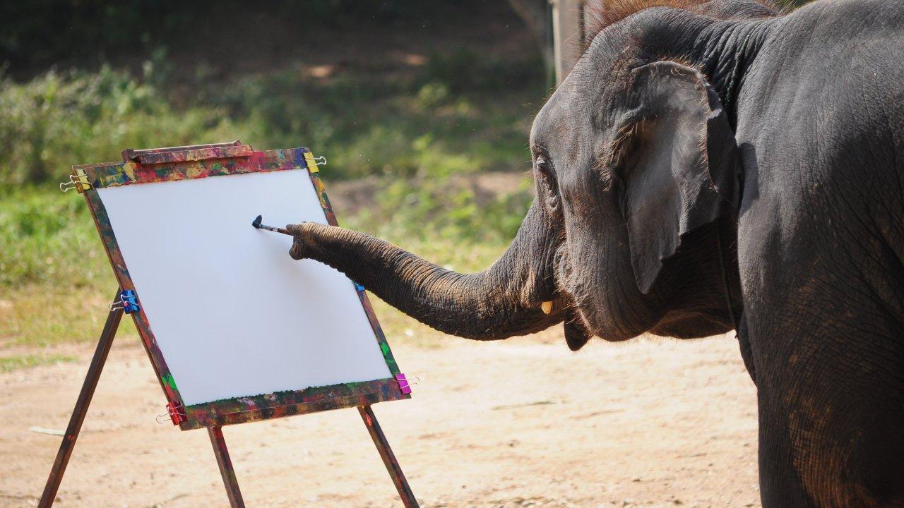 ТЕСТ! Много ли вы знаете о слонах?