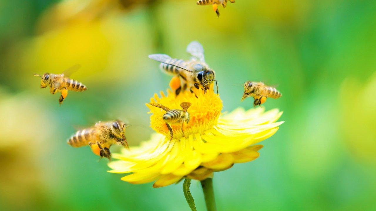 Много ли вы знаете о пчёлах?
