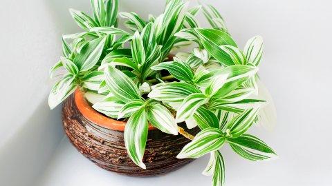 ТЕСТ: Знаете ли вы такое декоративно-лиственное комнатное растение?