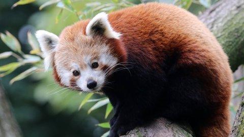 Какое это животное?