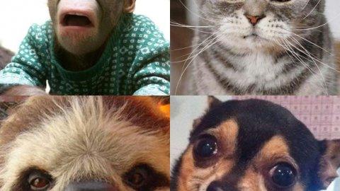 Какое ты животное?