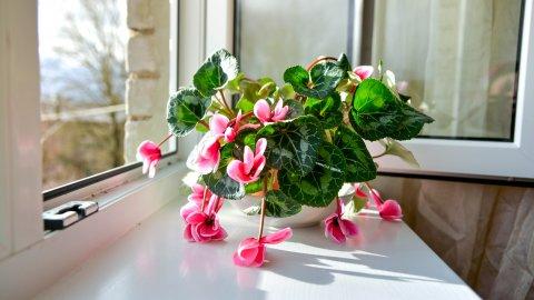 ТЕСТ: Хорошо ли вы знаете капризные комнатные растения?