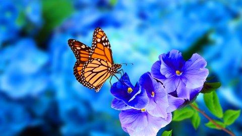 ТЕСТ: Угадайте цветок июня!