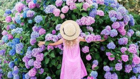 ТЕСТ: Цветы июля