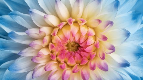 ТЕСТ: Угадайте цветок августа!