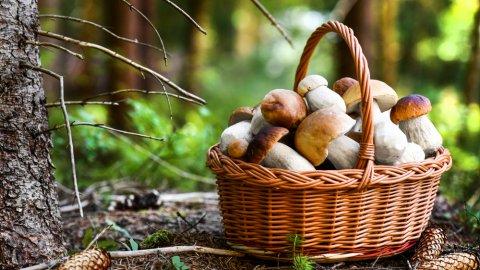 ТЕСТ: Как называется этот гриб?